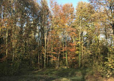 Waarderhout