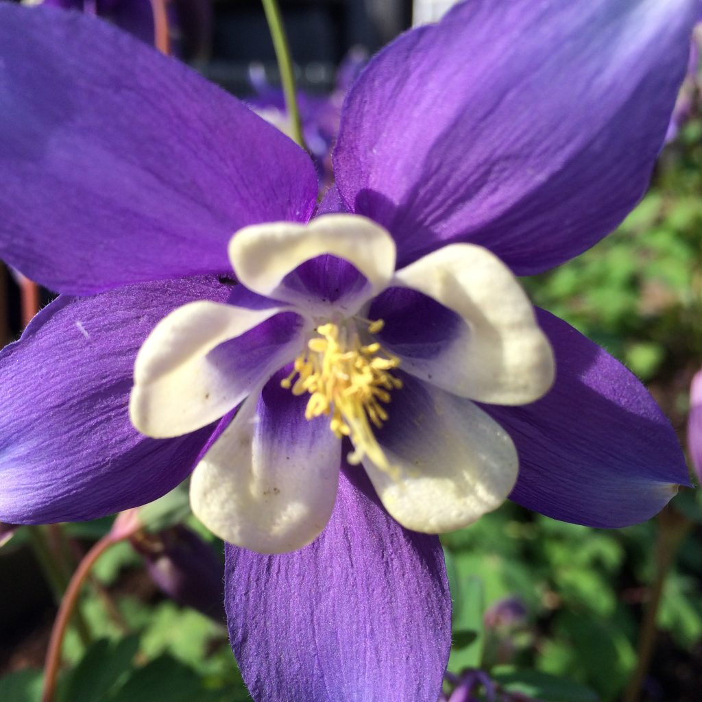 bloem-paars-tuin-1024x1024